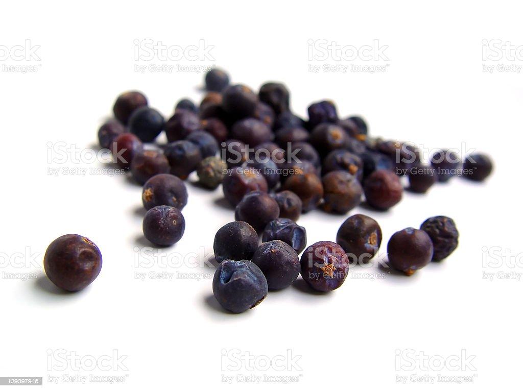 Berries of a Juniper Tree royalty-free stock photo