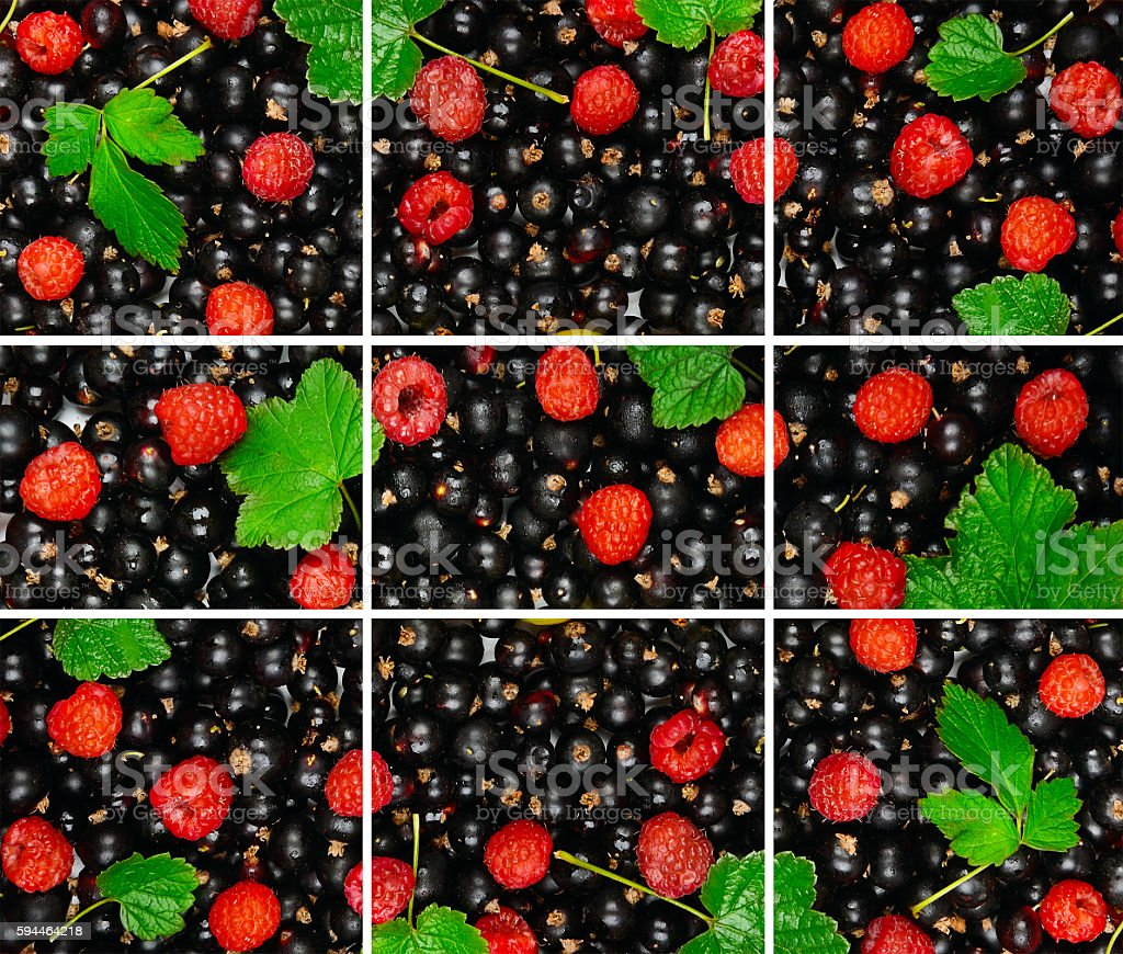 berries of black currant and raspberry stock photo
