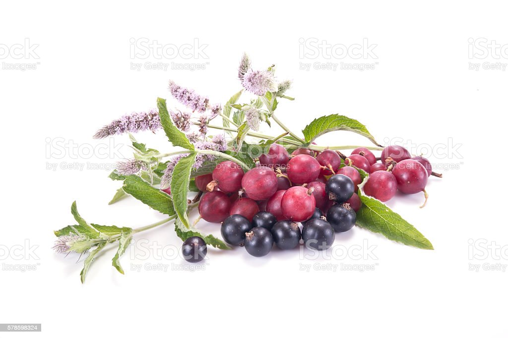 Berries of gooseberry and blackcurrant and mint Blooming stock photo
