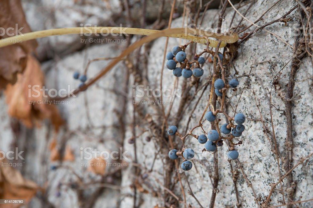 berry , Autumn in Korea stock photo