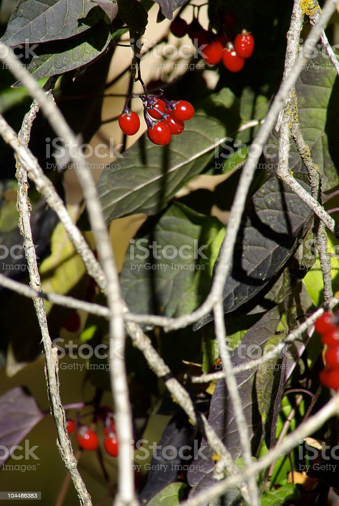 Berry Clusters royalty-free stock photo