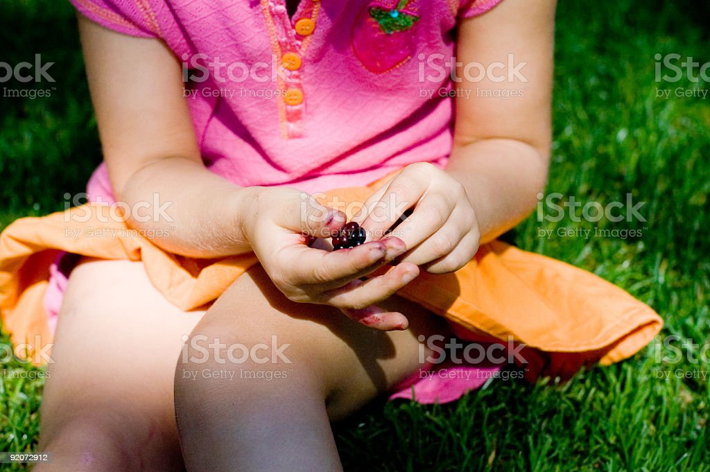 Berry picking stock photo