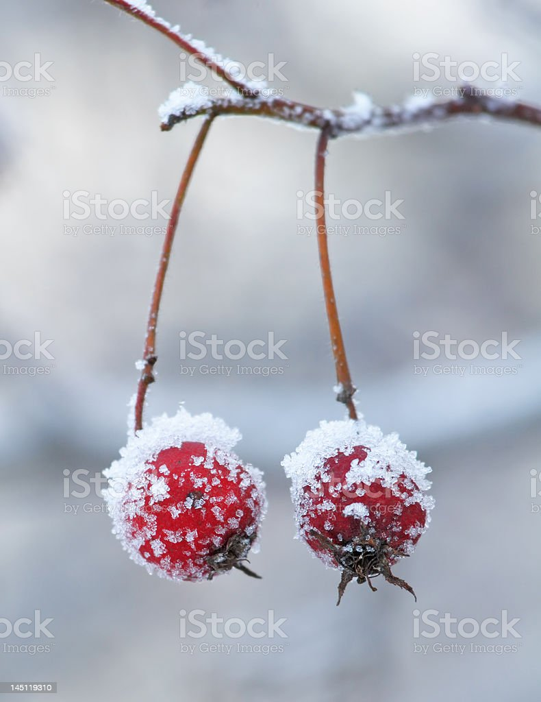 berry royalty-free stock photo