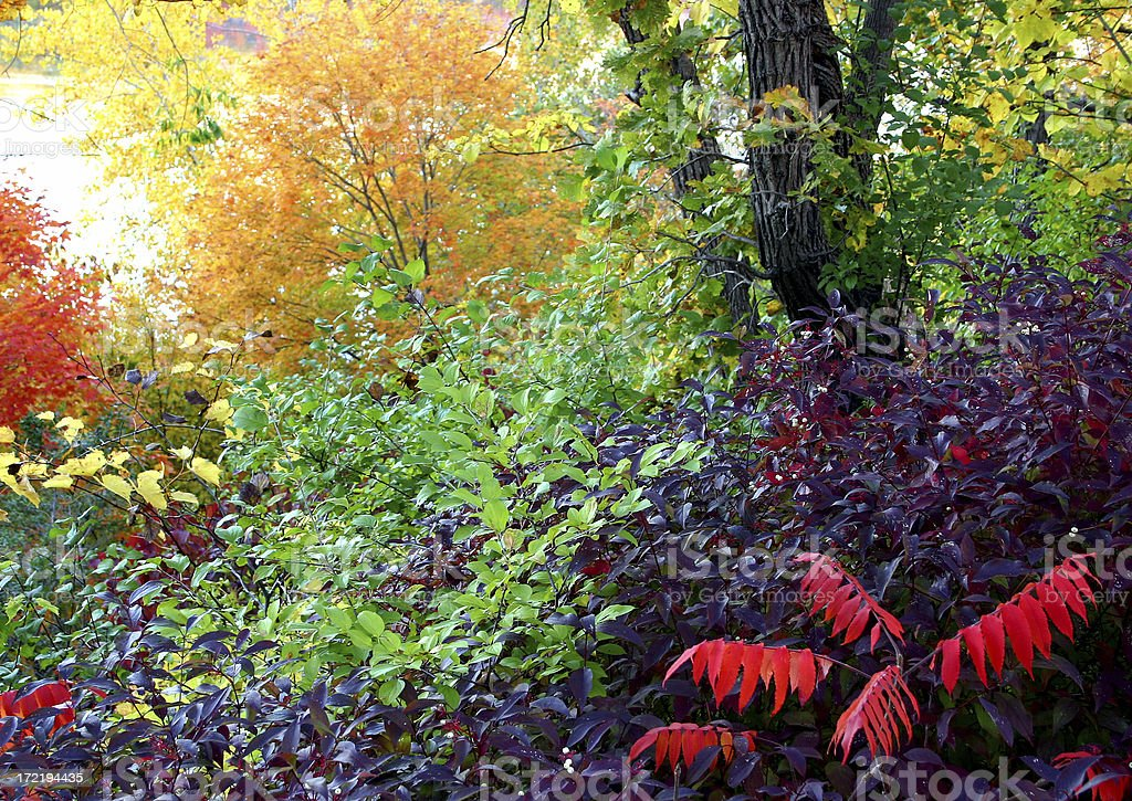 Best Fall Colors royalty-free stock photo
