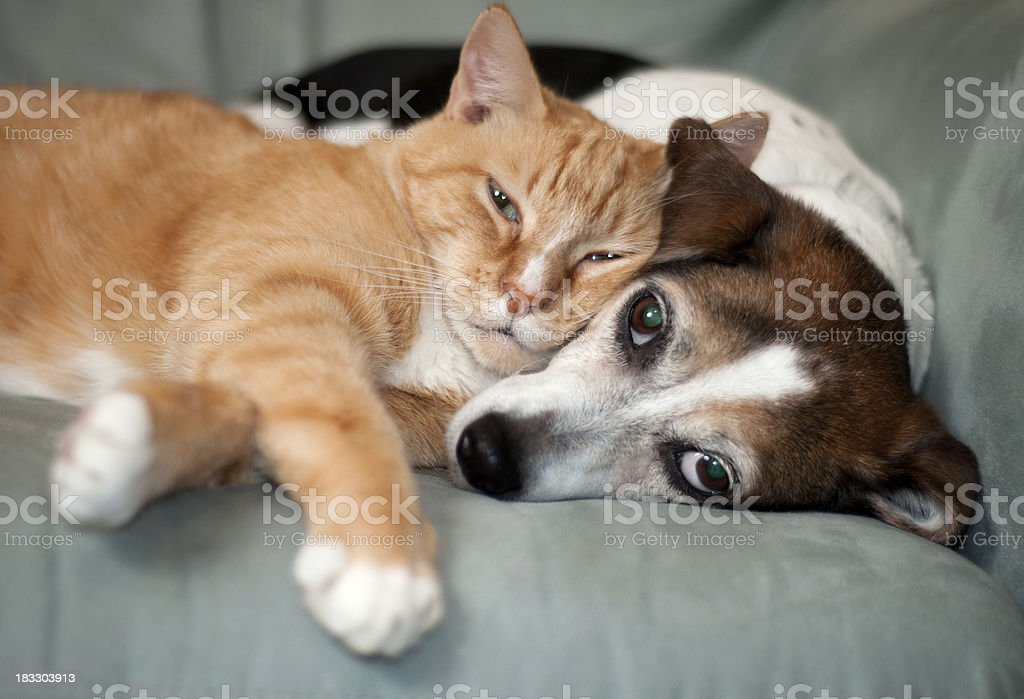 best friends stock photo