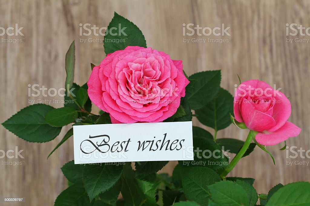 Best wishes card with wild pink roses stock photo