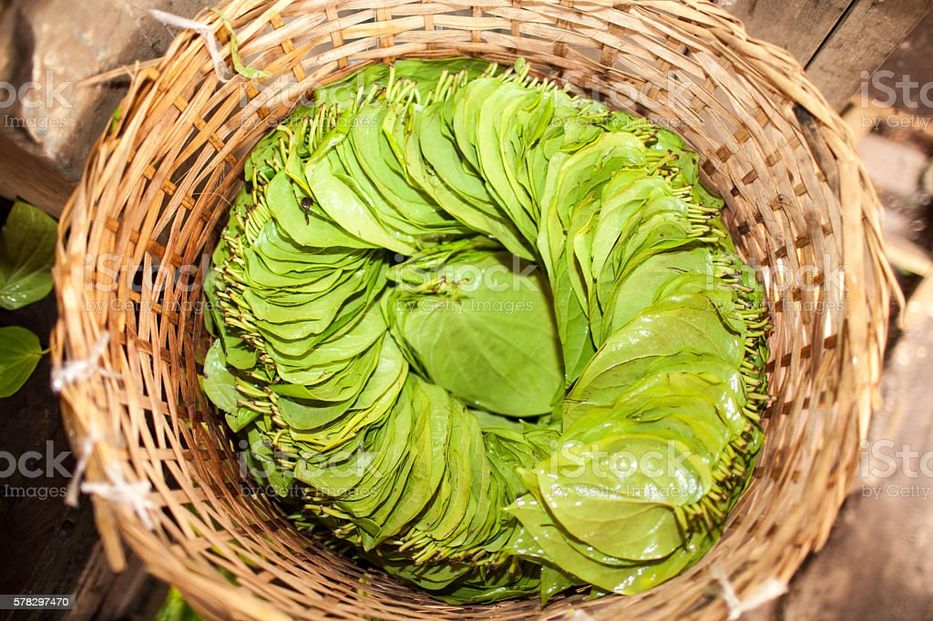 Betel chewing leaves in a basket stock photo
