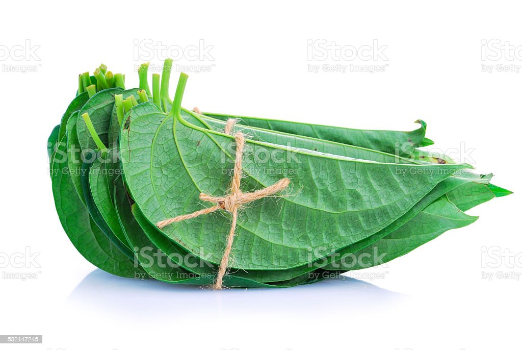 Betel leaf edible eating culture of Asia stock photo