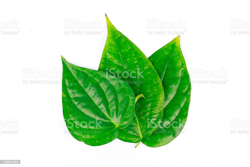betel leaf is herbal stock photo