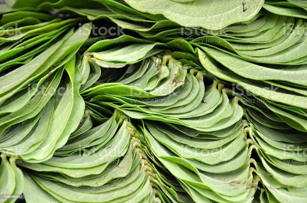 Betel leaf on the market stock photo