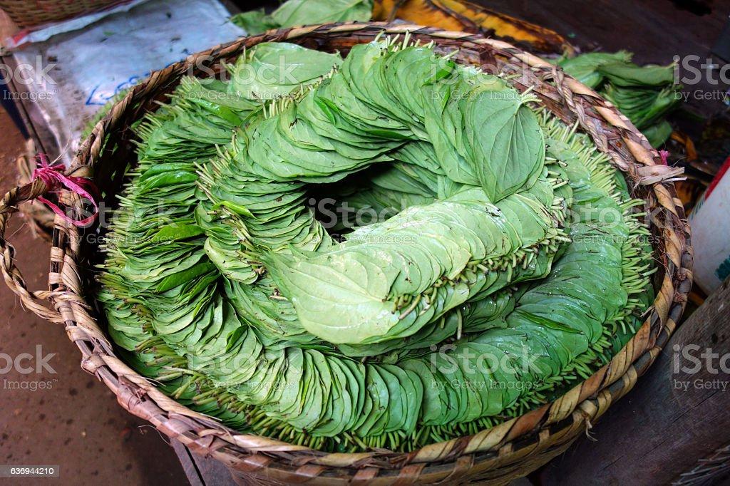 betel leaves, Myanmar stock photo