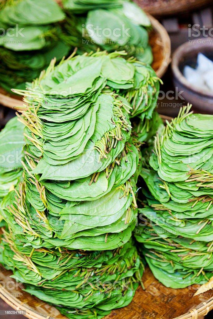 Betel Nut leaves stock photo