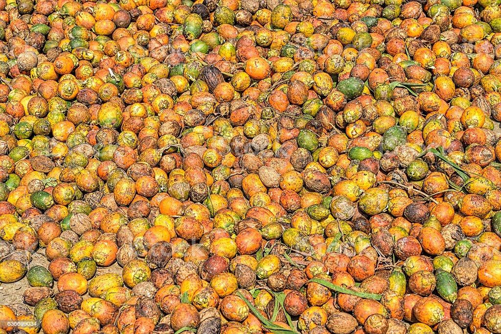 Betel Nut or Areca Nut background stock photo