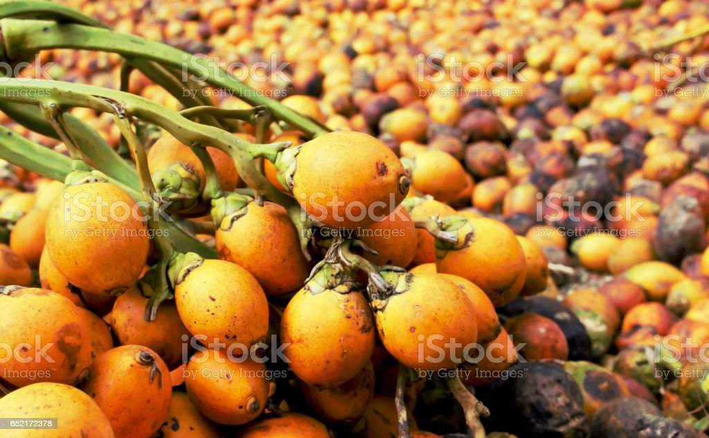 Betel nut . stock photo