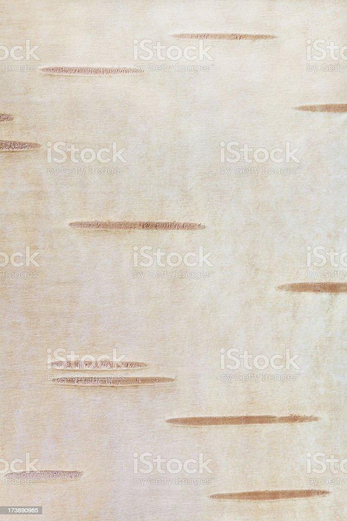 Betula background stock photo