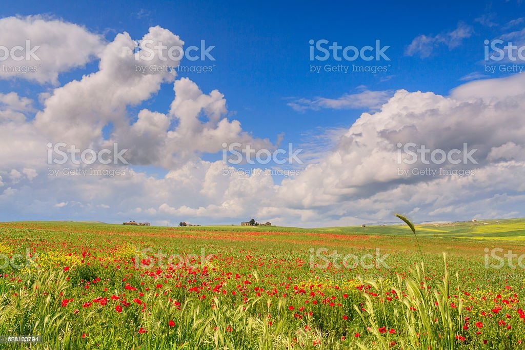 Between Apulia and Basilicata: rural landscape spring. - ITALY - stock photo