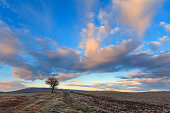 Between Apulia and Basilicata:lonely tree dominated by clouds at sunset.Italy.