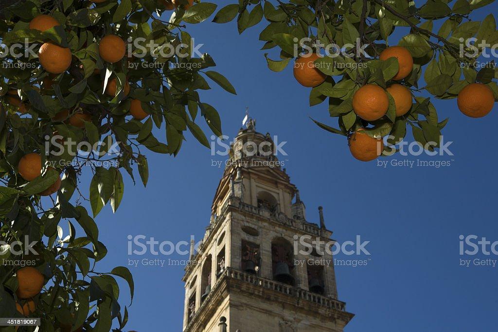 Between orange tree stock photo