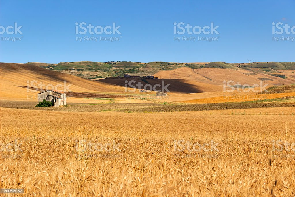 Between Puglia and Basilicata:hills with cornfields and farmhouses.ITALY stock photo