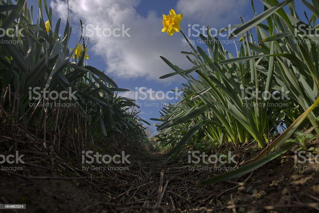 Between rows. stock photo