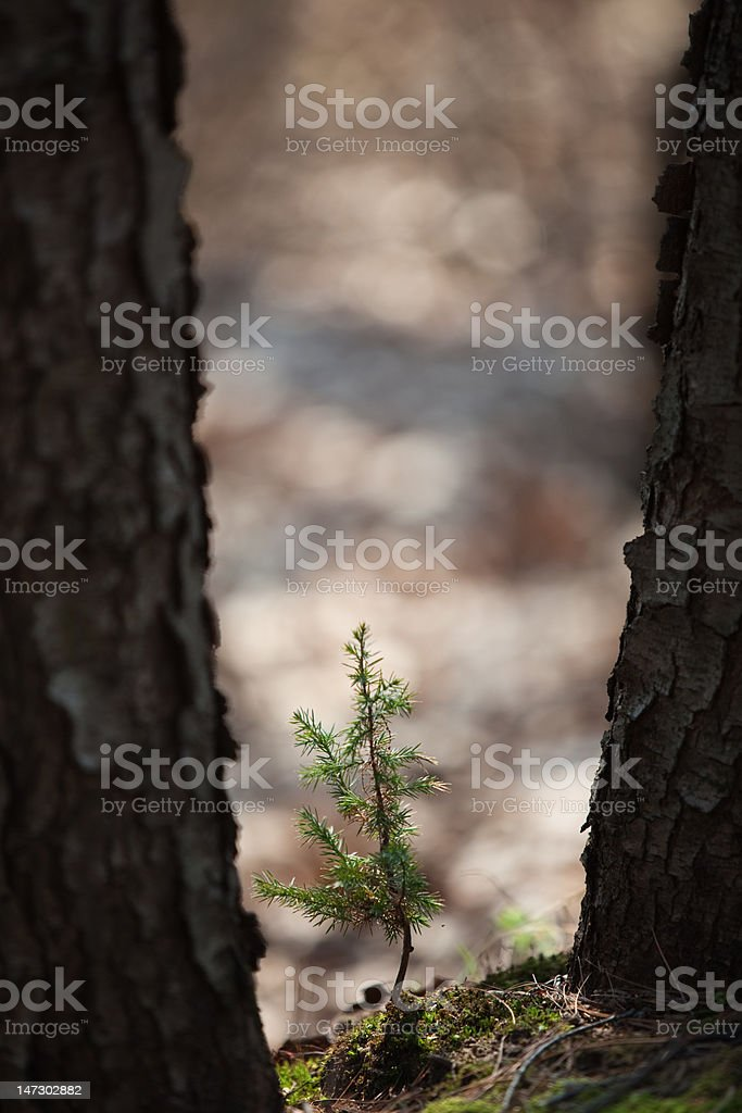Between the Big Guys royalty-free stock photo