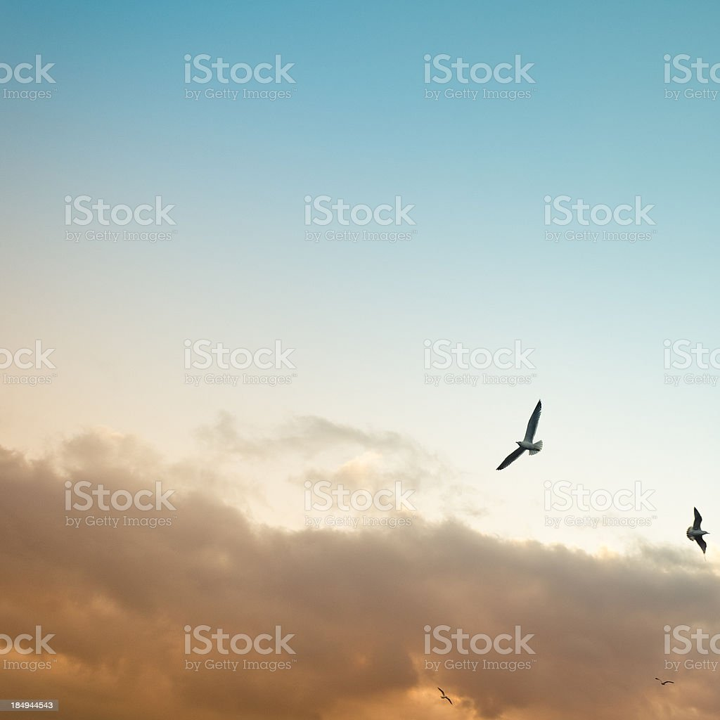 Between the dead and life, evil e good royalty-free stock photo
