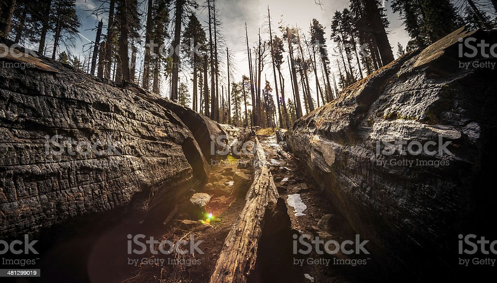 Between the Fallen Trees stock photo