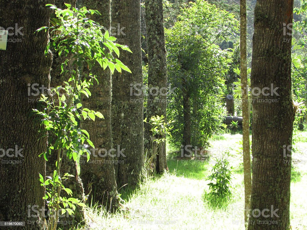 Between the trees royalty-free stock photo