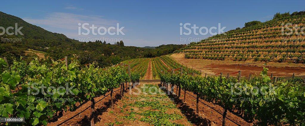 Between the Vines stock photo