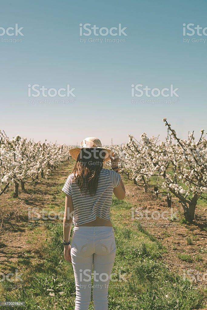 Between trees stock photo