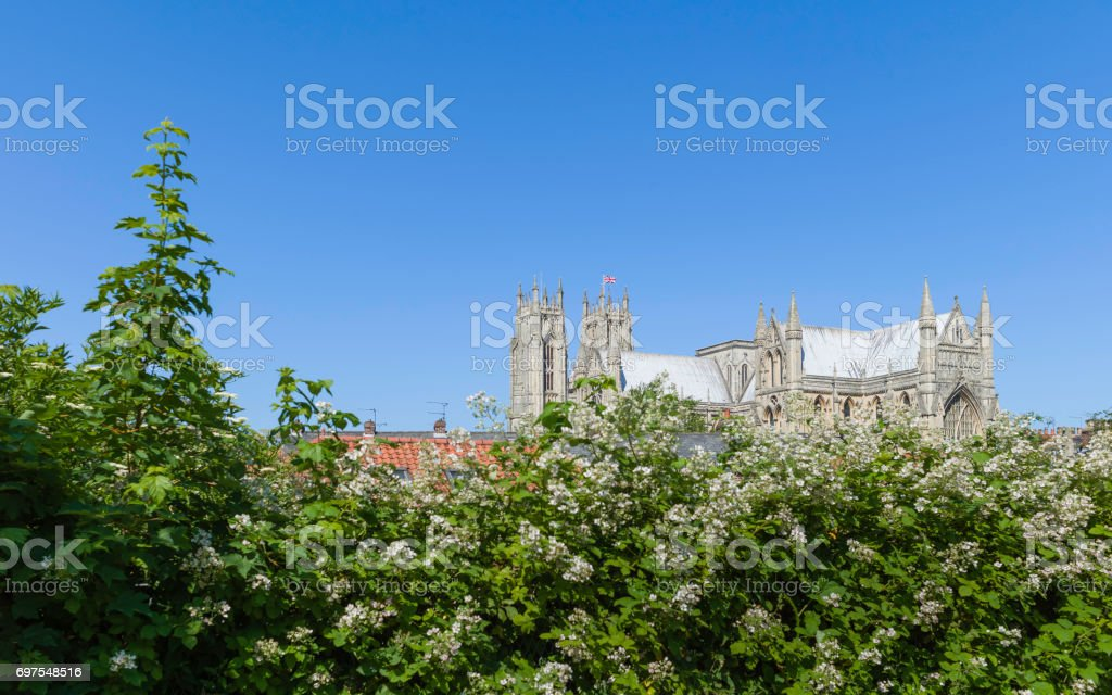 Beverley Minster flanked by hedgerow in summer, Yorkshire, UK. stock photo