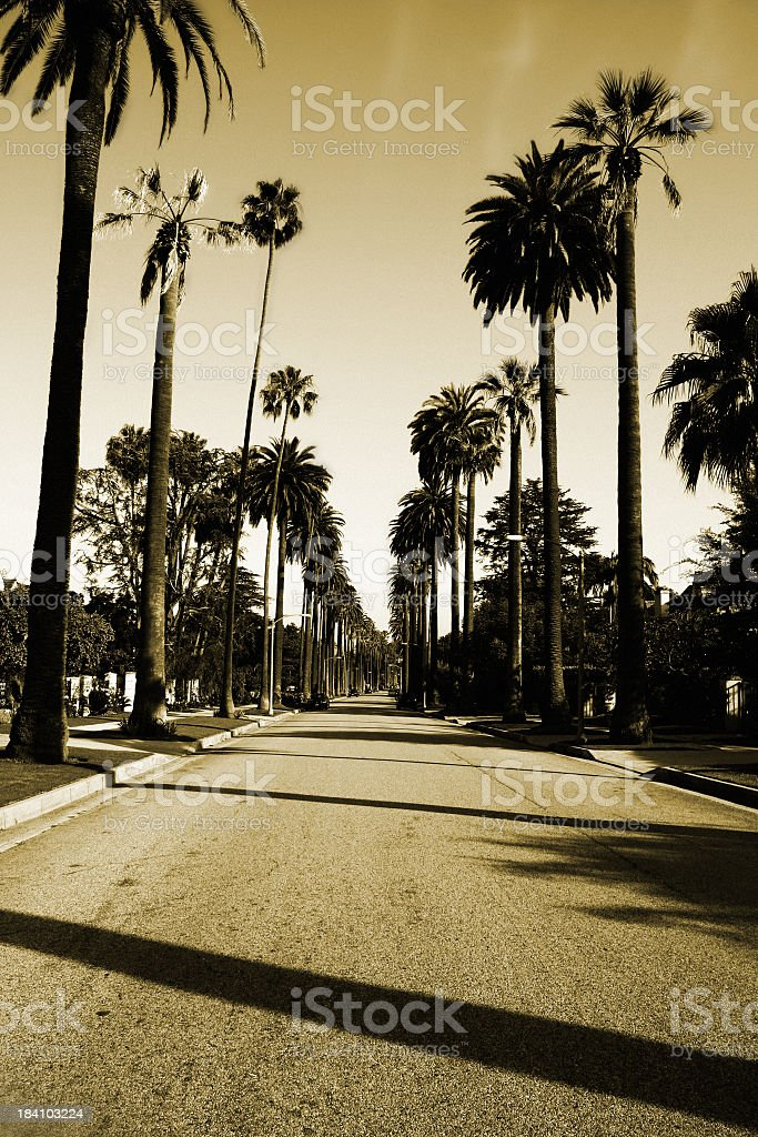 Beverly Hills Palm Trees stock photo