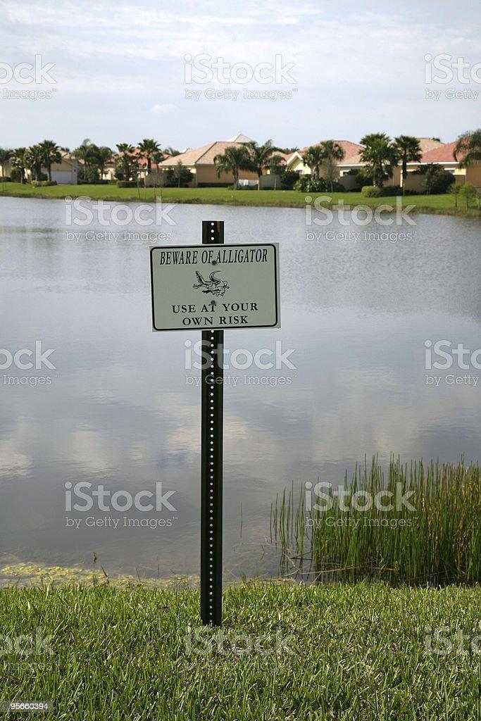 Beware of Alligator stock photo