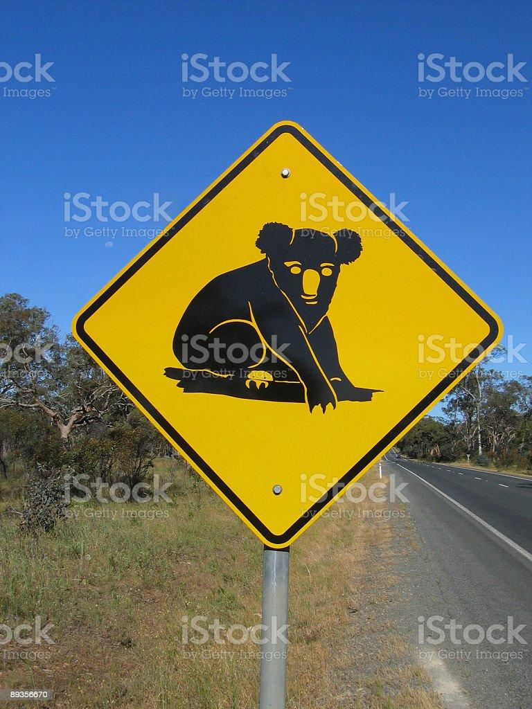 Beware of koalas royalty-free stock photo