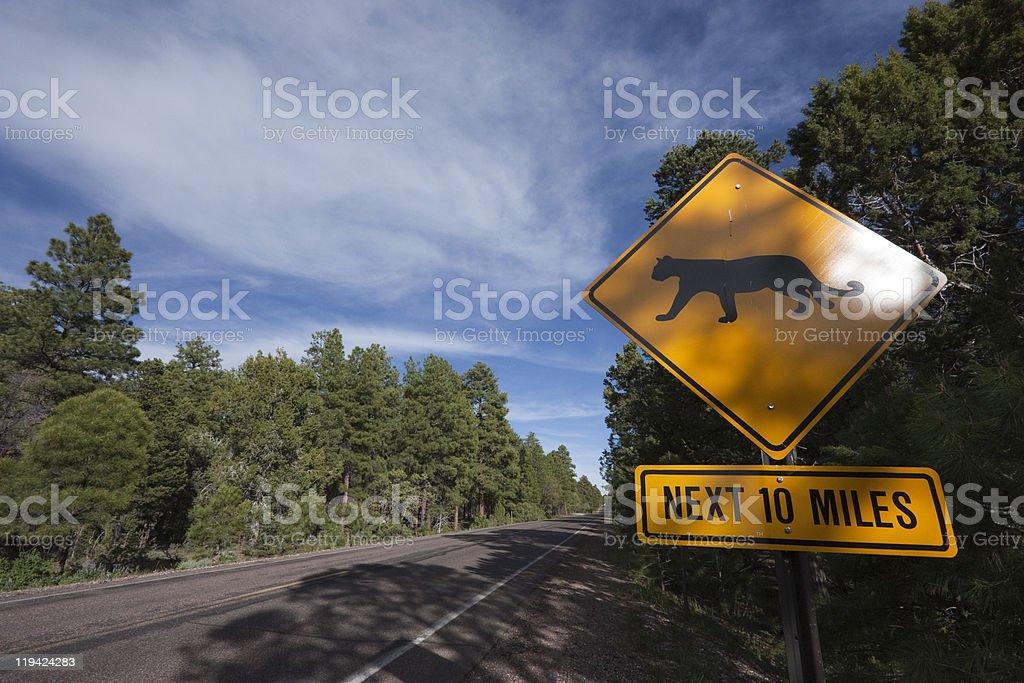 Beware of Puma Crossing stock photo