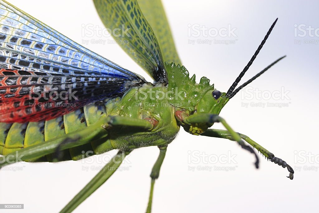 Beware of the bug royalty-free stock photo