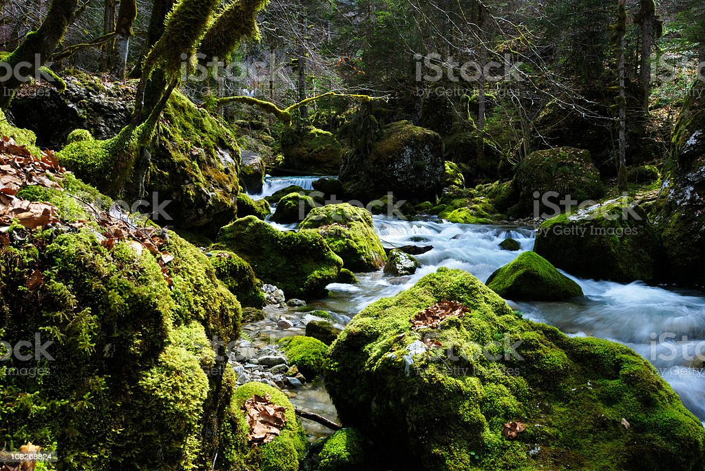 Bewitched Forest with Flowing Stream of Water stock photo
