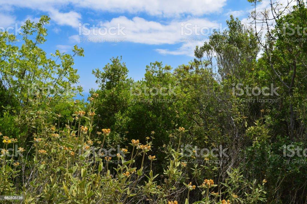 Beydaglari Coastal National Park (Sahil Milli Parki - Olympos Park). Wild nature of Mediterranean coastal region of Turkey stock photo