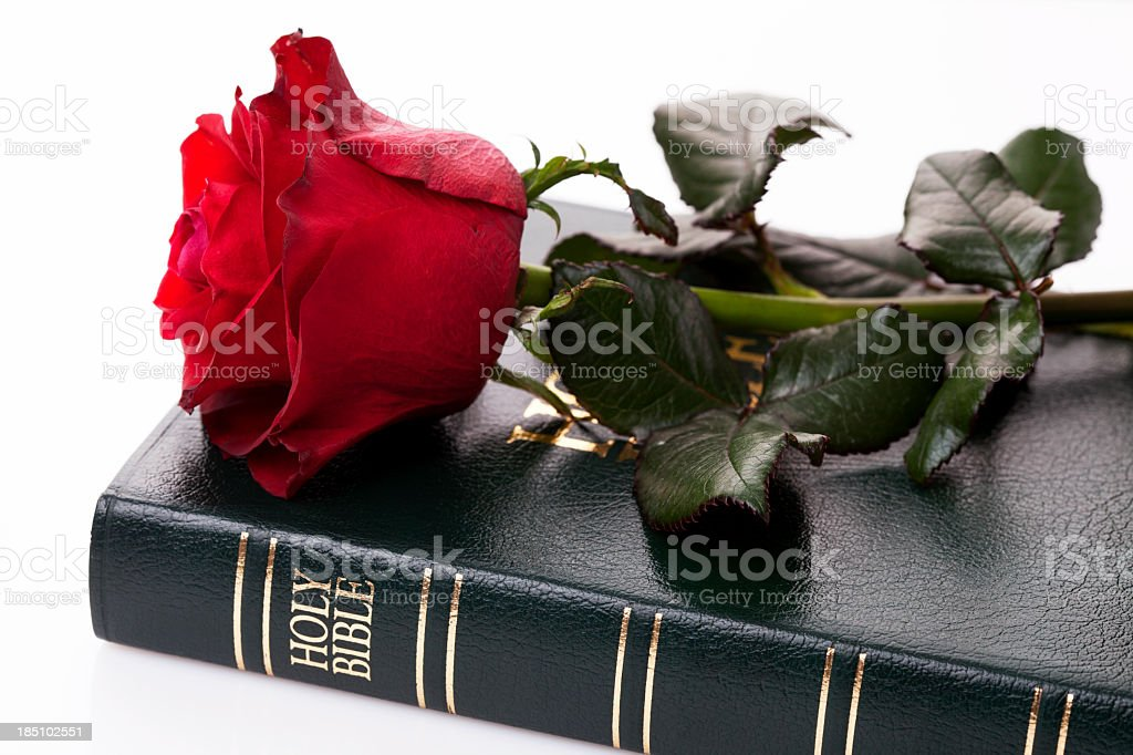 Bible and rose stock photo