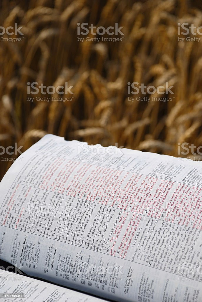 Bible And Wheat stock photo