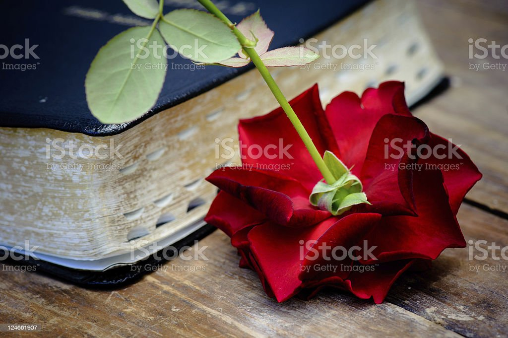 Bible & red rose royalty-free stock photo