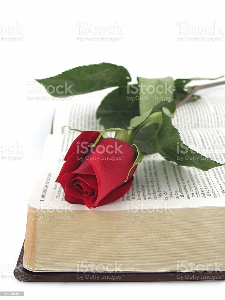 Bible with Red Rose (KJV) royalty-free stock photo