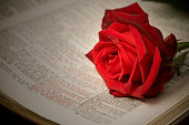 Bible with Rose series XL