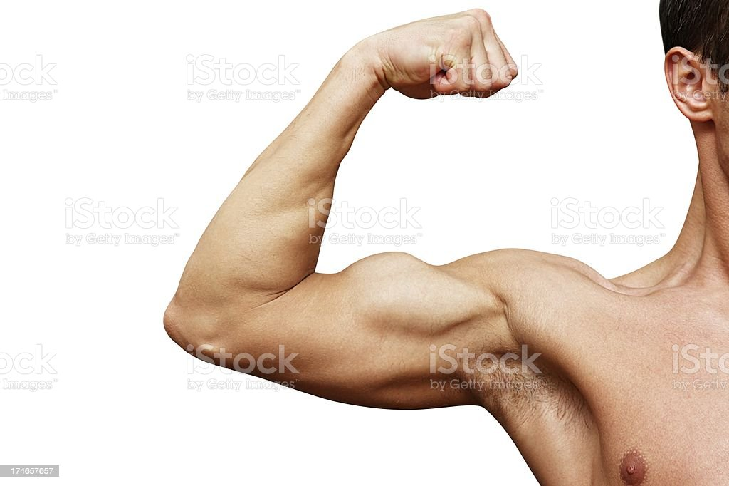Bicep Isolated On White royalty-free stock photo