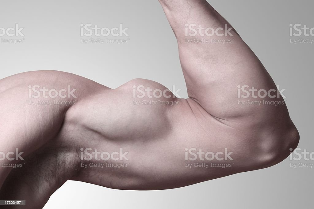 Bicep on a gray background royalty-free stock photo