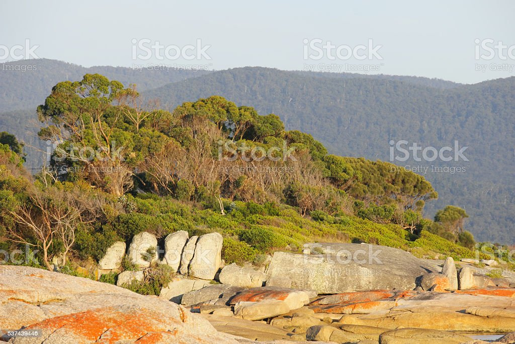 Bicheno famed for the red lichen rocks and penguins tasmania stock photo