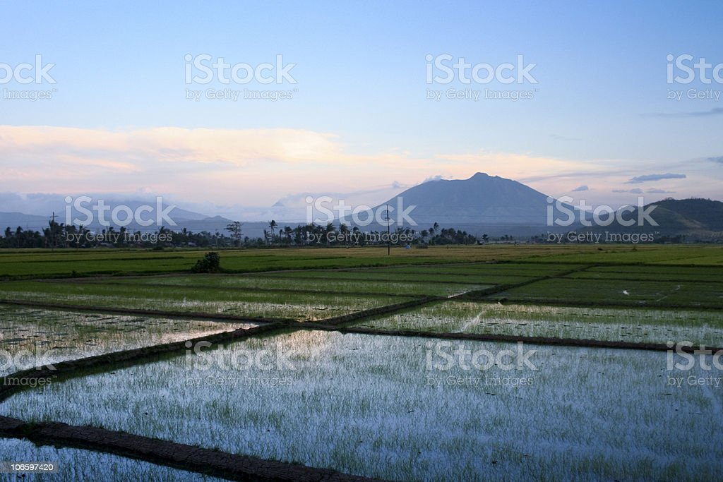 bicol rice paddies sunset philippines royalty-free stock photo