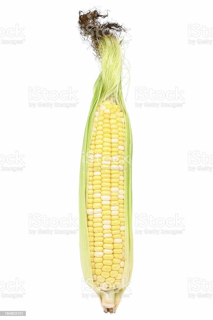 bicolor corn stock photo