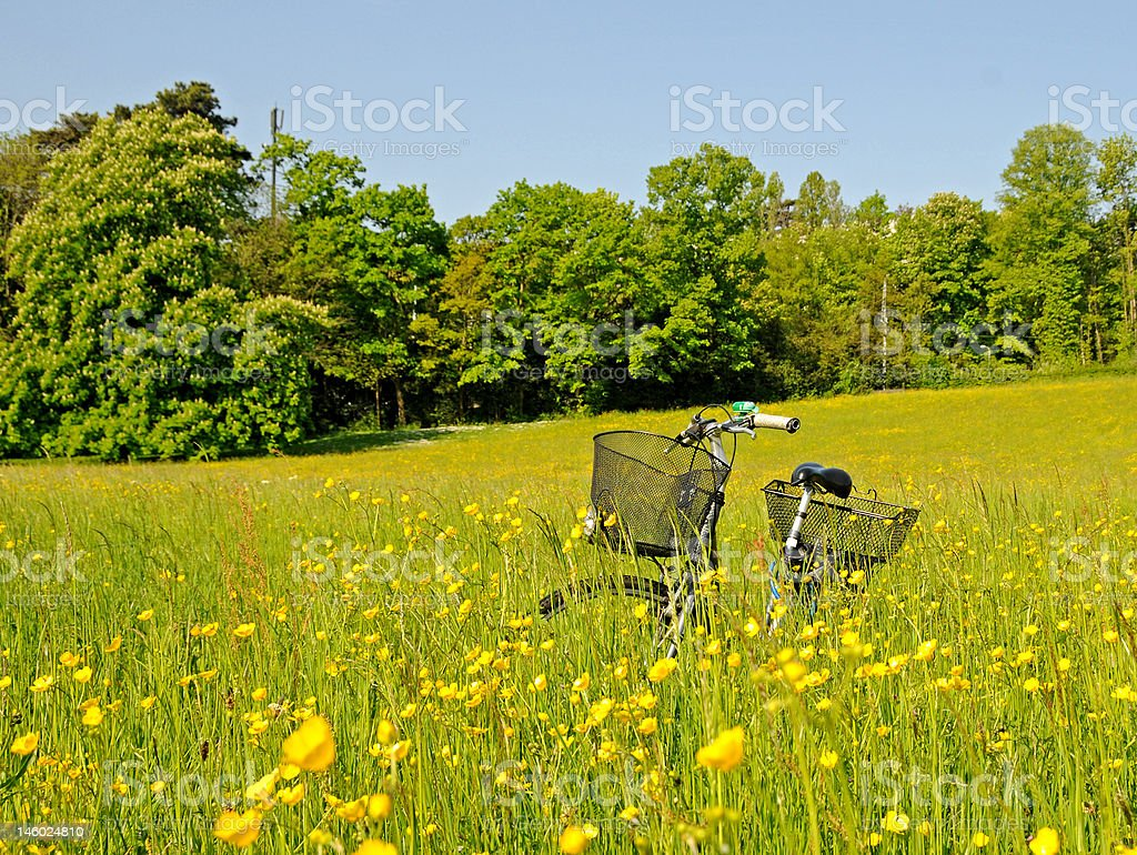 Bicycle in the high grass royalty-free stock photo