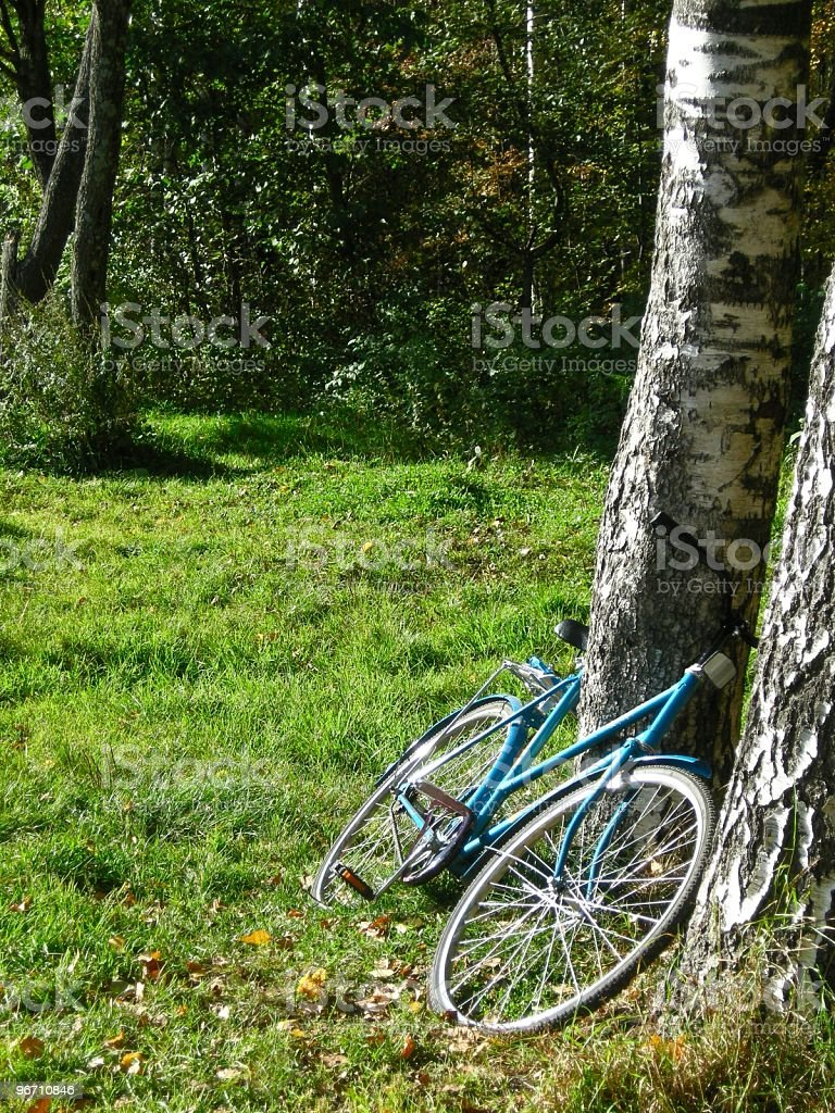 Bicycle leaning at the birch royalty-free stock photo